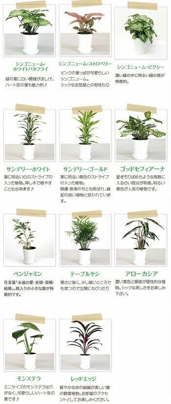ミニ観葉植物一覧(商品画像用)