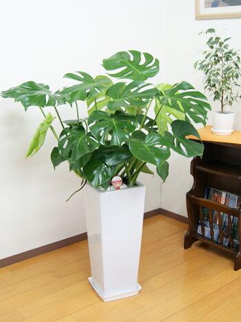 https://image.rakuten.co.jp/hanakyubin/cabinet/pop/02438128/imgrc0072439476.jpg
