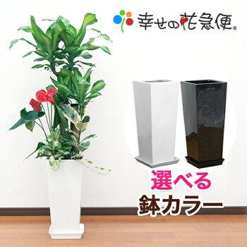 https://image.rakuten.co.jp/hanakyubin/cabinet/shohin/yoseue/07506035/10000098.jpg