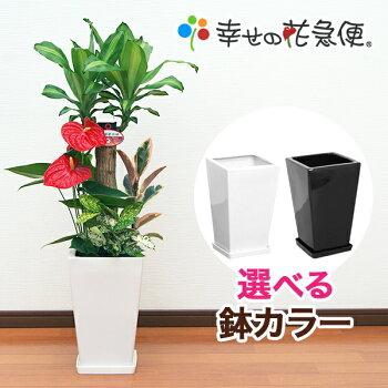 https://image.rakuten.co.jp/hanakyubin/cabinet/shohin/yoseue/07506035/10000110.jpg