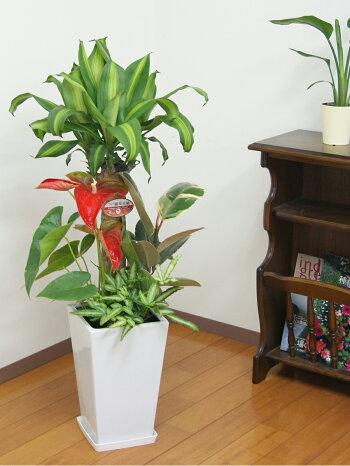 https://image.rakuten.co.jp/hanakyubin/cabinet/shohin/yoseue/07506035/img57343068.jpg