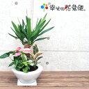 観葉植物 寄せ植え(ユッカ)7号浅陶器鉢|(白) 高さ約65cm【開店祝い 新築祝い 誕生日プレゼント 引越し祝い インテリア…