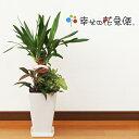 観葉植物 寄せ植え(ユッカ)6号角陶器鉢 |高さ約65cm【開店祝い 新築祝い 誕生日プレゼント 引越し祝い インテリア お…