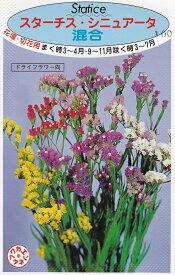 スターチス・シニュアータ混合福花園種苗【種子】