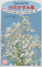 白花かすみ草【種子】福花園種苗