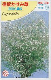 宿根かすみ草白花八重咲【種子】福花園種苗