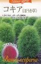 コキア(ほうき草)【種子】福花園種苗