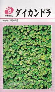 ダイカンドラ 種子10ml