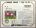 朝顔 団十郎 10粒【種子】福花園種苗