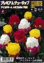 【秋植え球根】プレミアムチューリップアイスクリームトリプルポップ混合 3球福花園種苗