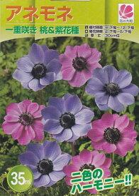 アネモネ 一重咲き桃&紫花種 35ml【秋植え球根】花の大和