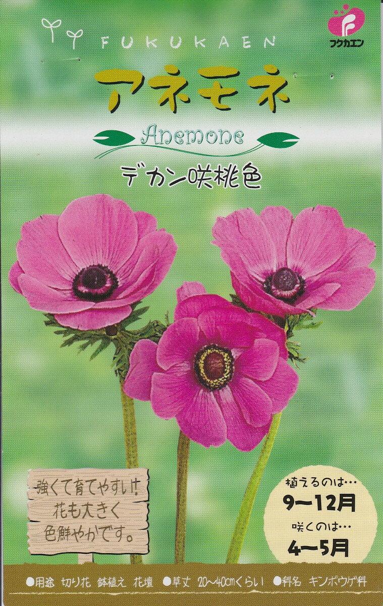【秋植え球根】アネモネデカン咲 桃色