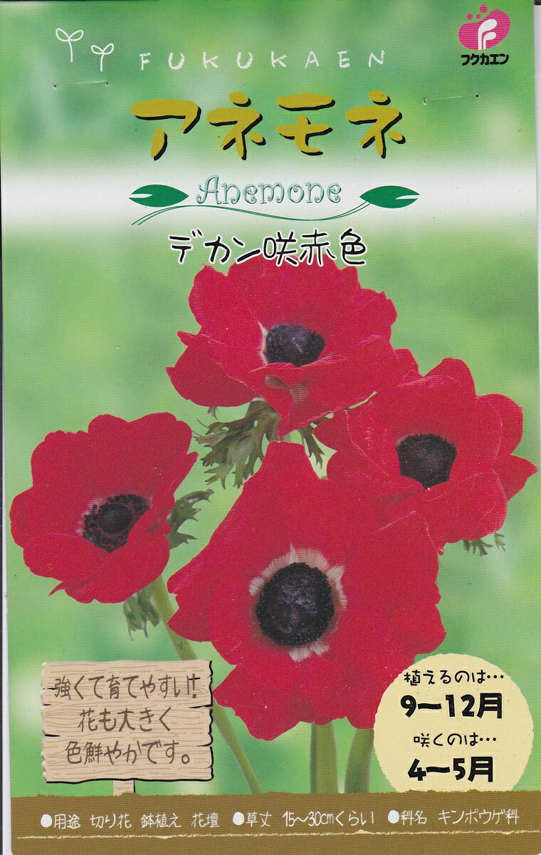 【秋植え球根】アネモネデカン咲 赤色