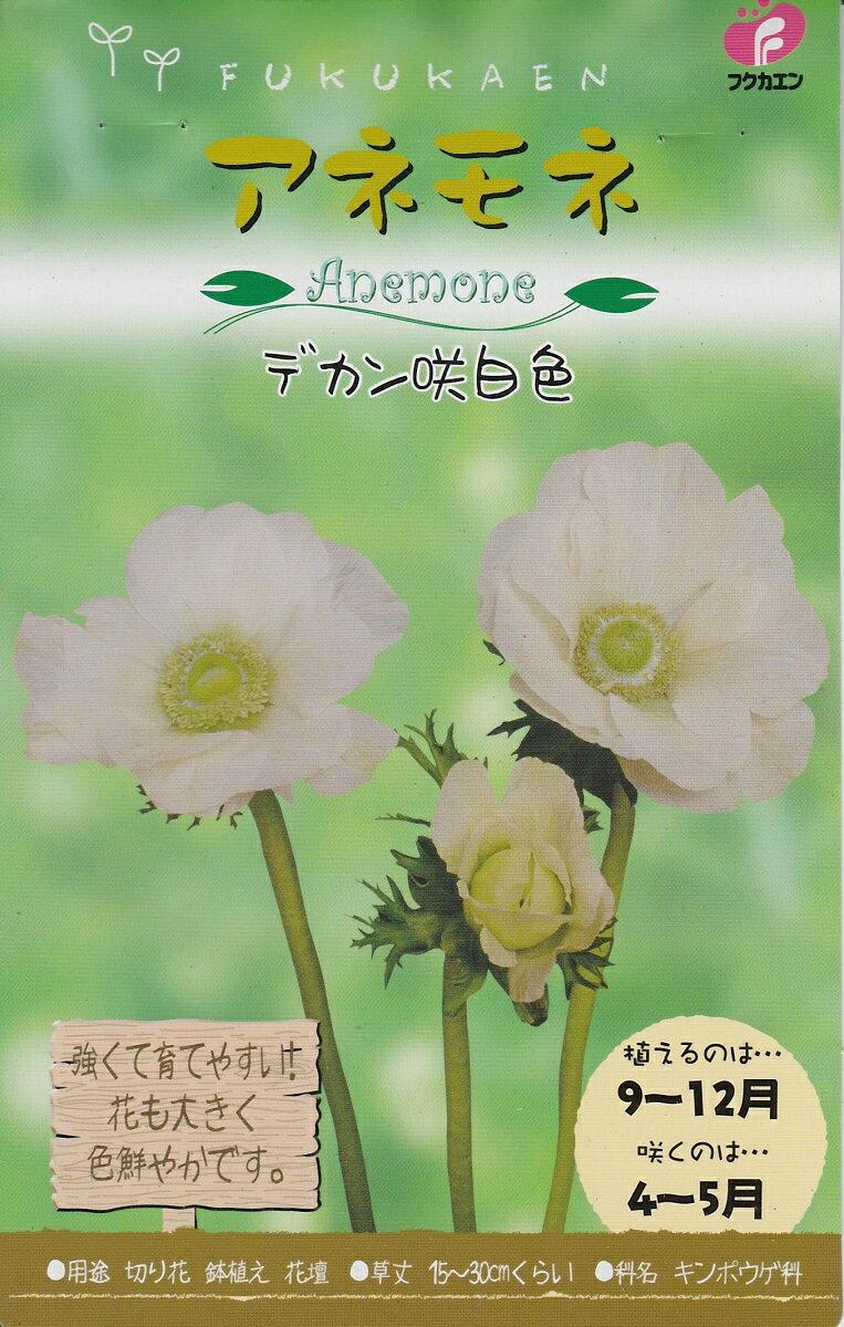 【秋植え球根】アネモネデカン咲 白色