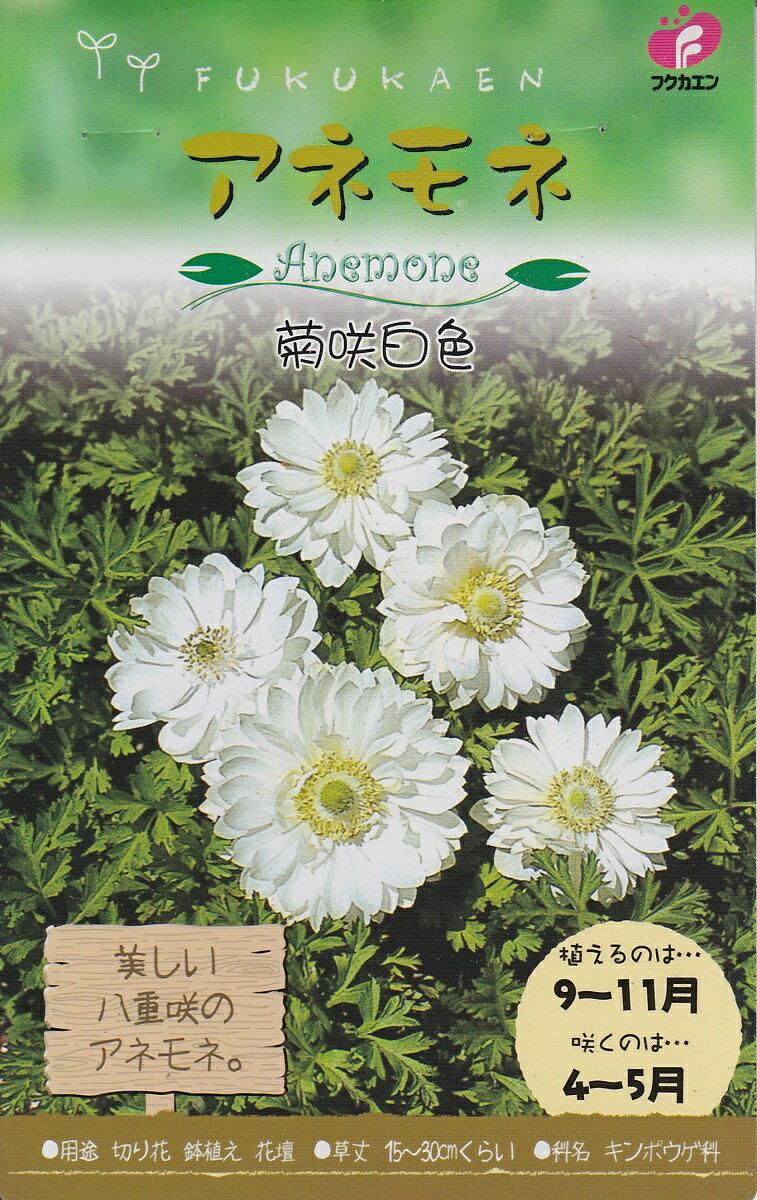 アネモネ 菊咲 白色【秋植え球根】