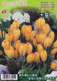 クロッカス 黄色 12球【秋植え球根】