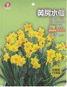 【お徳用】黄房水仙 10球【秋植え球根】