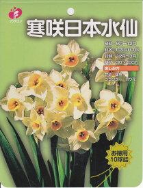 【お徳用】寒咲日本水仙10球【秋植え球根】