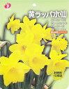 【お徳用】黄ラッパ水仙 10球【秋植え球根】