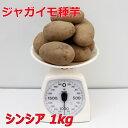 シンシア 種芋【種イモ用】1kg(充填時)
