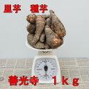 里芋 善光寺1kg(充填時)種イモ用
