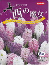 【秋植え球根】ヒヤシンス 西の魔女3色8球 サカタのタネ