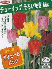【秋植え球根】チューリップ そろい咲きミックスサカタのタネ 混合20球入り