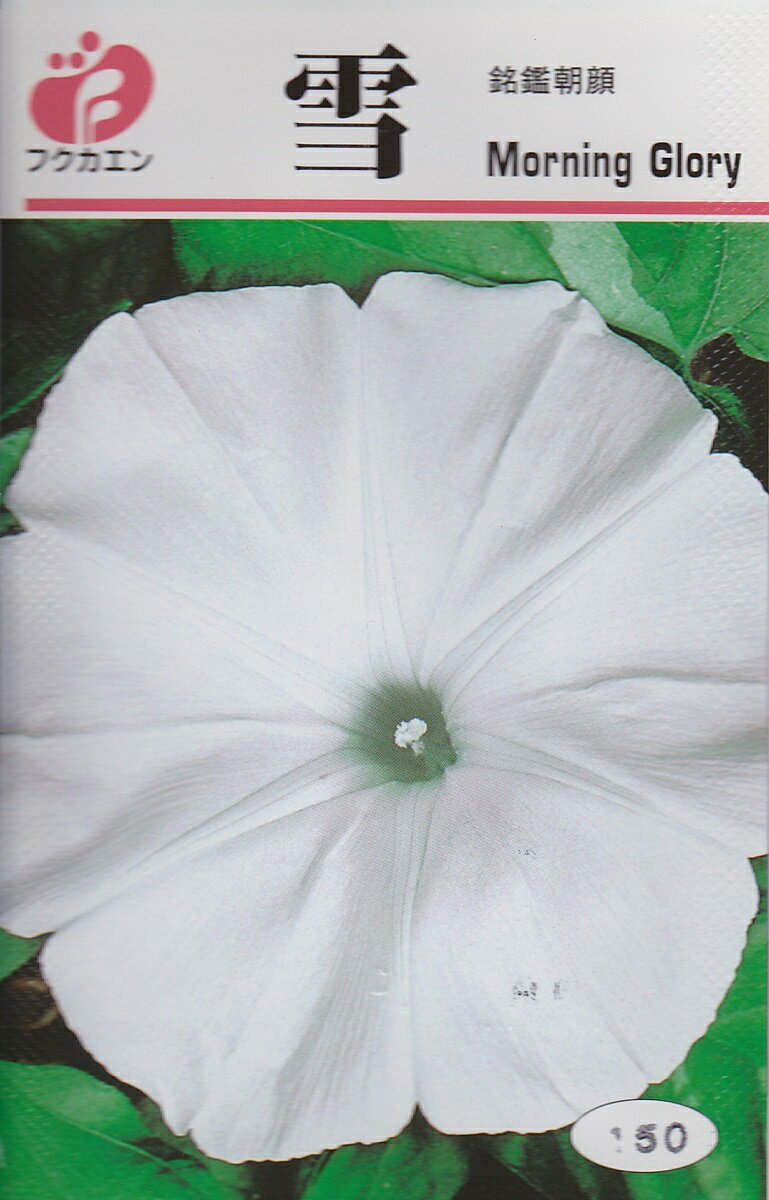 アサガオ 雪(ゆき)【種子】福花園種苗