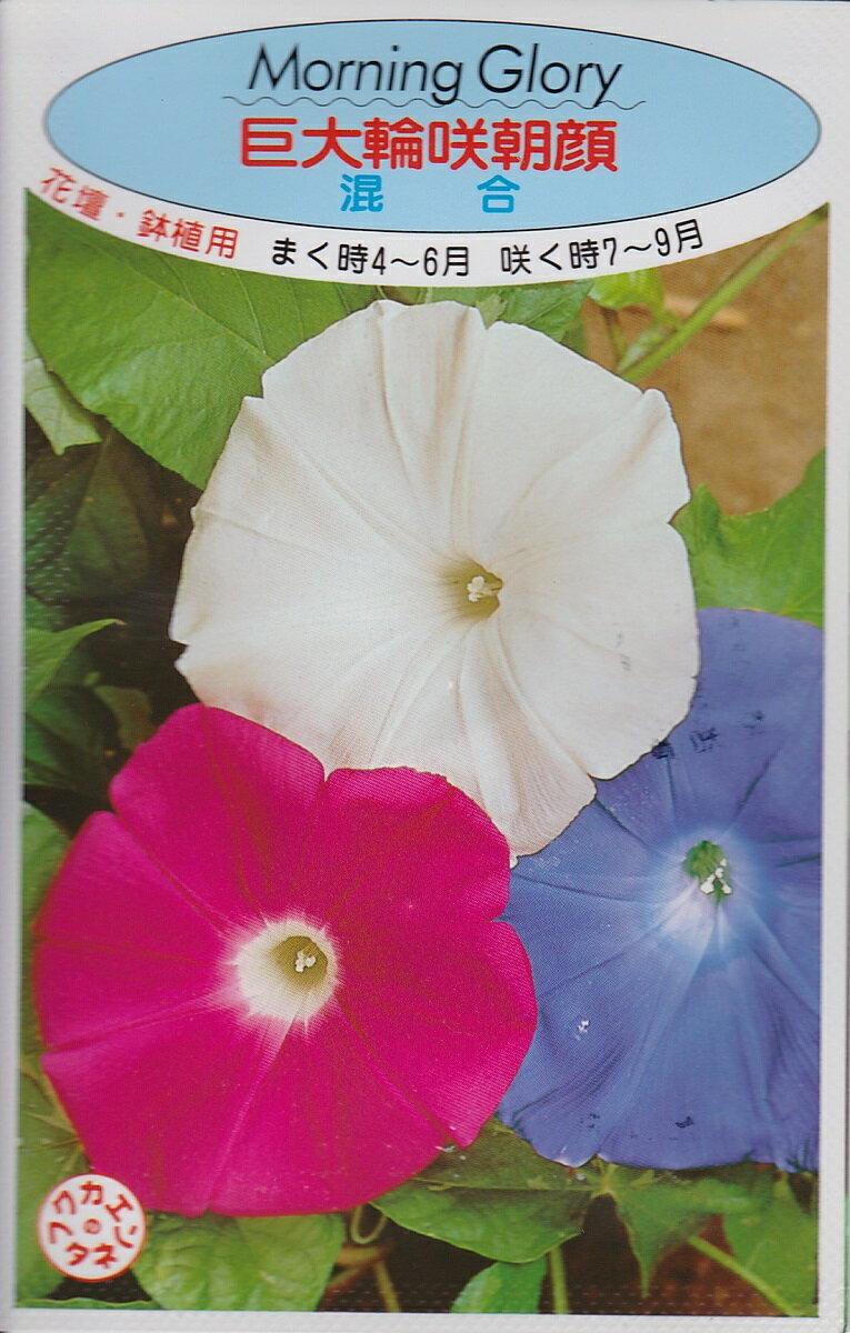 アサガオ巨大輪咲朝顔 混合【種子】福花園種苗