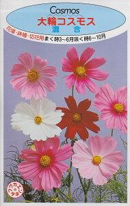 大輪コスモス 混合【種子】福花園種苗