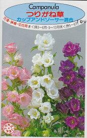 つりがね草カップアンドソーサー混合【種子】福花園種苗
