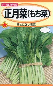 【秋まき種子】正月菜 (もち菜)トーホクのたね