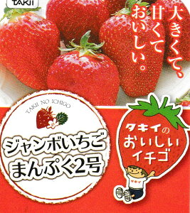 ジャンボいちごまんぷく2号4号ポット1苗タキイ種苗【イチゴ苗】
