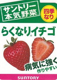 サントリー イチゴ苗らくなりイチゴ四季なり 3号ポット1苗