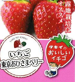 東京おひさまベリー4号ポット1苗タキイ種苗【イチゴ苗】