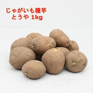 とうや 1kgじゃがいも 種芋(充填時)