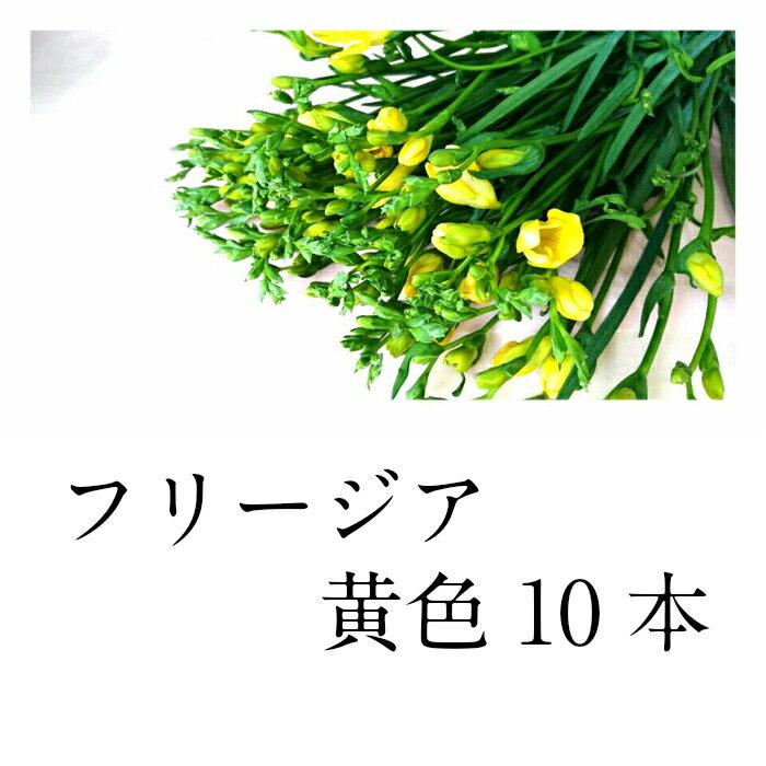 切花 フリージア 黄色 10本 生花 良い香り 花束は+300円でできます 備考欄にご記入ください