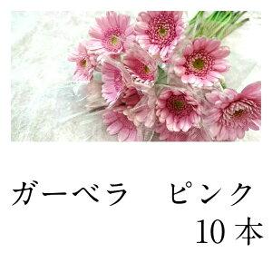 切花 ガーベラ ピンク 10本 生花 +300円で花束になります。備考欄に花束希望と書いてください。