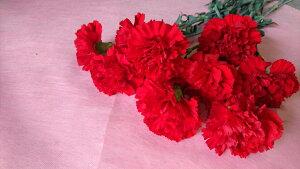 切花 一輪 カーネーション 赤色 1本 +300円で花束になります。備考欄に花束希望と書いてください。