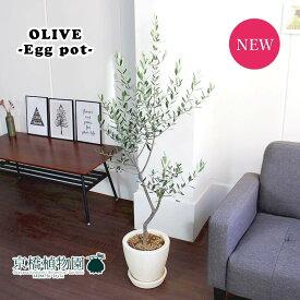 【選べる鉢カラー】オリーブ【エッグポット】【アイボリー/グレー】【ぷっくりたまご型の鉢】
