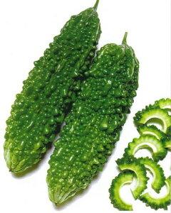 送料無料 接木野菜苗 3個セット サラダゴーヤ 9cmポット苗