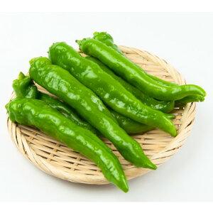 送料無料 接木野菜苗 3個セット 万願寺とうがらし 大和野菜 9cmポット苗