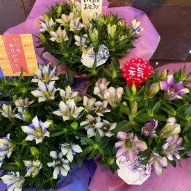 りんどうの鉢<心美シリーズ5号鉢>「きれいに咲く可憐な花です。コンパクトで飾りやすい。」ただ今発送中【オリジナルカードOK!】【送料無料】【敬老の日 ギフト】【敬老の日 花】【沖縄・離島はNG 】