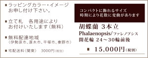 胡蝶蘭<白3本立>15000円
