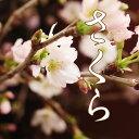 花 桜の花束 春 花束 卒業式 入学式 花