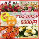 【花】送料、即日発送 フラワーコンシェルジュが厳選した花屋のお祝いアレンジメント花 5000円 【あす楽対応】【楽ギフ_メッセ入力…