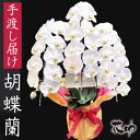 就任祝い、開業・開店祝い、移転、祝い、誕生日祝いなどのお祝いに最適 色が選べる フラワーコンシェルジュが厳選した花屋の胡蝶蘭 3…