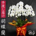 送料無料 無料ラッピング、名札又はカード付き、フラワーコンシェルジュが厳選した花屋の胡蝶蘭 5本立ち50輪以上 50000円 鉢花【楽…