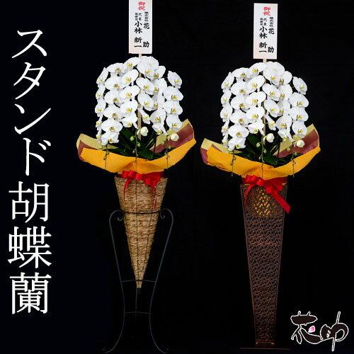 高品質 大輪 胡蝶蘭 3本立て 27輪以上 ホワイト 花鉢 スタンド胡蝶蘭【あす楽対応】【楽ギフ_メッセ入力】