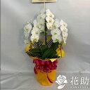 【お花屋さんから手渡し届け】【送料,名札,画像無料】フラワーコンシェルジュが厳選した花屋の胡蝶蘭 3本立ち 24輪…